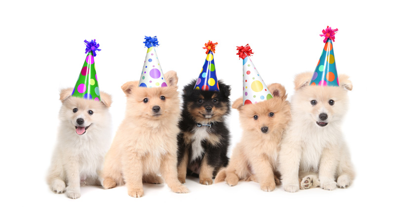 Kids Party Entertainment - Puppies