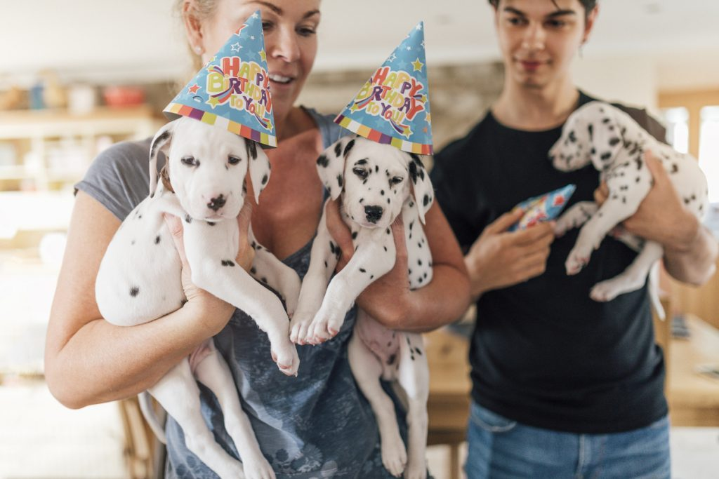 Puppy Party Events
